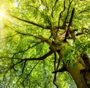 Le bois soleil - vie de quartier-arbre