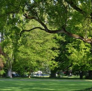 Le bois soleil - vie de quartier-jardin-public